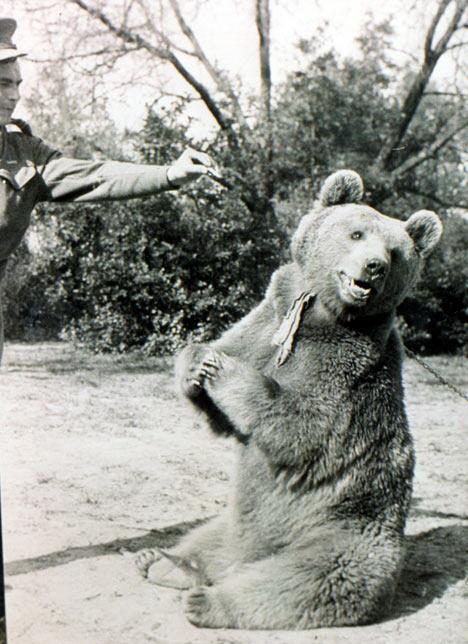 [Historia] Voytek, el oso soldado. Voytek-en-el-Zoo