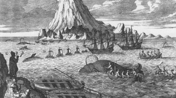 caza de ballenas