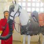 Rajput y su Marwari-elefante