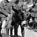 El joven John Simpson y su burro, los héroes de Galípoli