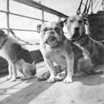 Las otras víctimas del Titanic, las de cuatro patas