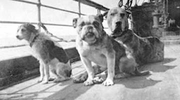 Perros Titanic