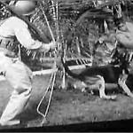 Cuando EEUU planeó invadir Japón con perros en la II Guerra Mundial