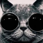 Chester, el gato que escribía artículos de Física