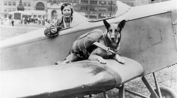 Parachute dog1