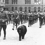Gander, el perro que se sacrificó para salvar a los soldados heridos del Royal Rifles de Canadá
