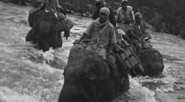 Elefantes rescatan birmanos